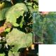 Quanto è importante continuare la difesa fitosanitaria anche in post-raccolta