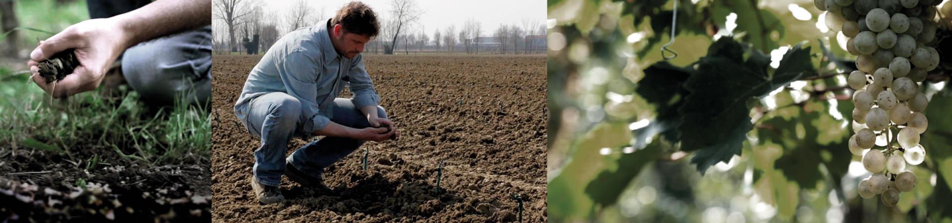 Zarpellon-Agrigoltura