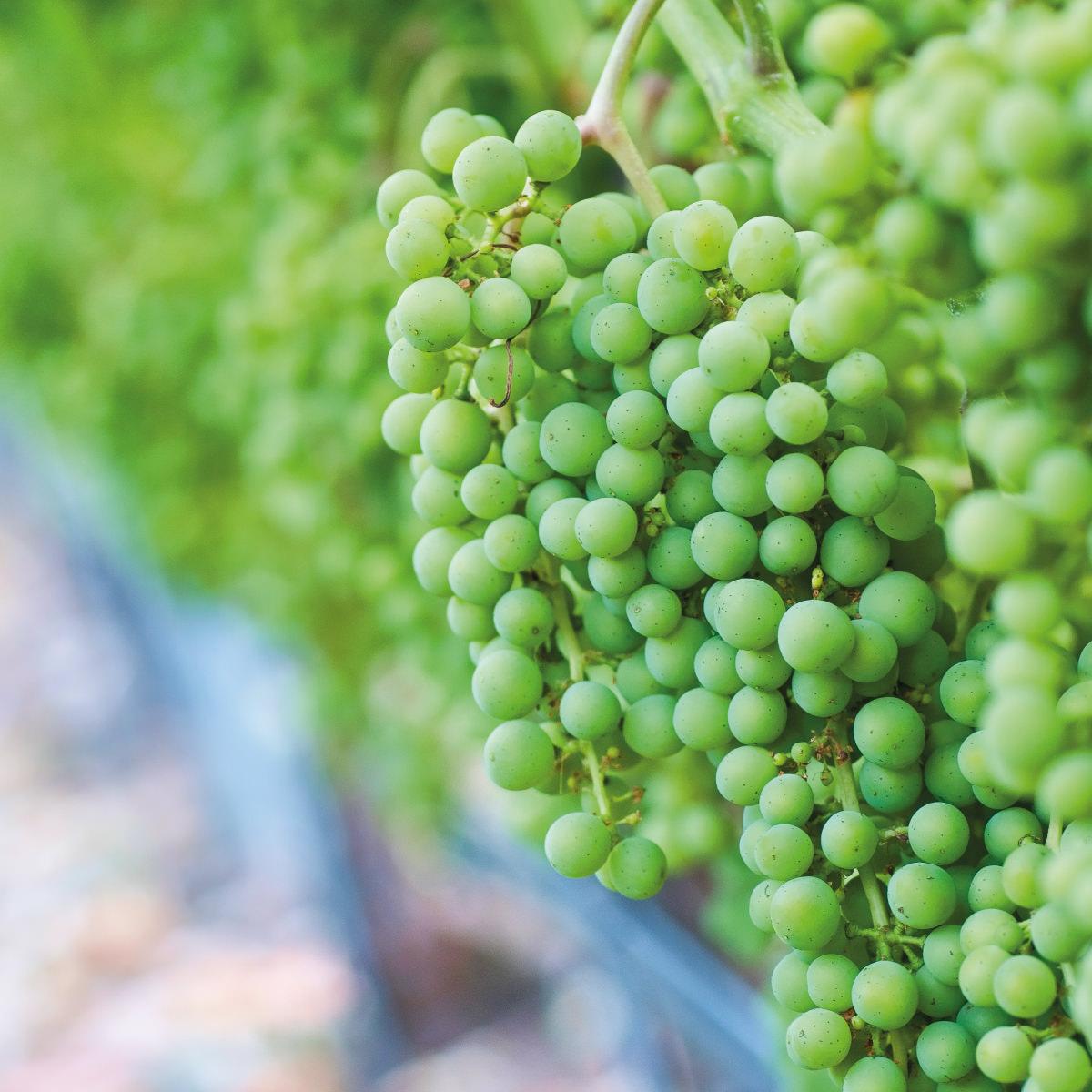 Zarpellon agricoltura-riduzione-fitofarmaci