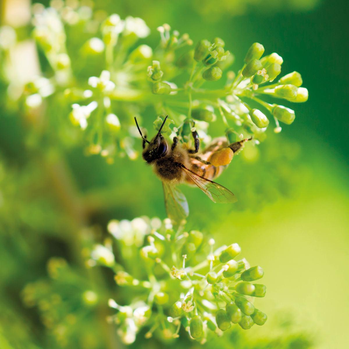 Zarpellon agricoltura-Prodotti-fitosanitari