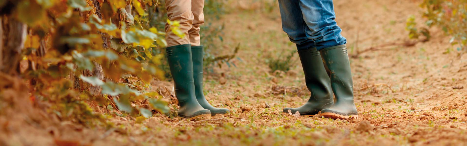 Zarpellon agricoltura- Cosa facciamo