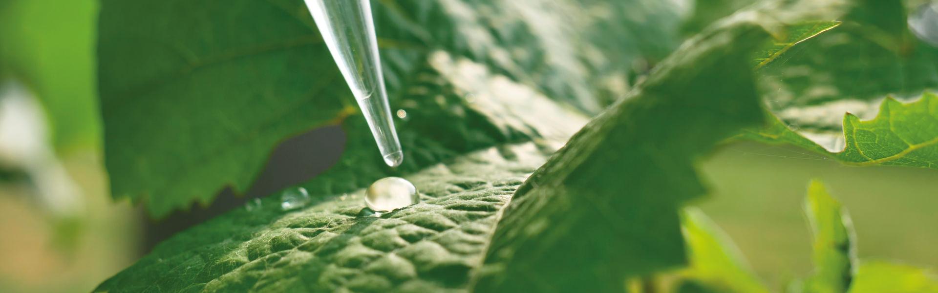 Zarpellon agricoltura-Patentino-Prodotti