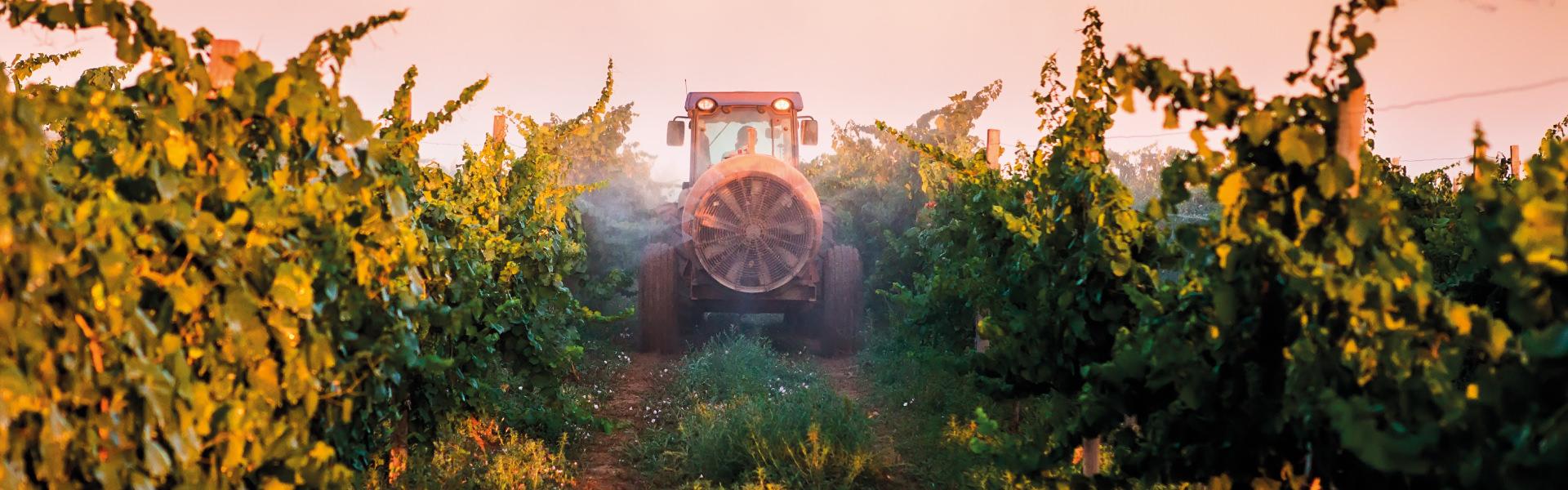 Zarpellon agricoltura Raccolta-contenitori